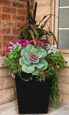 Fall container gardening flowers ornamental cabbage ornamental grasses pansie Fall container gardening flowers ornamental cabbage ornamental grasses pansies mums WELCOME. Ornamental Cabbage, Ornamental Grasses, Diy Gardening, Organic Gardening, Fall Container Gardening, Vegetable Gardening, Hydroponic Gardening, Flower Gardening, Fall Flower Arrangements