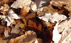 Texturas de Folhas.