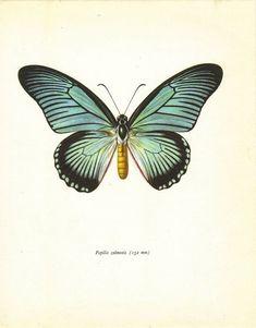 Vintage Butterfly Print Prochazka Art Print Home door TheWholeBook, $12.00