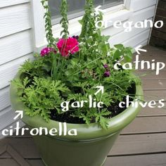 Why not beautify your garden with some practical plants and herbs and at the same time keep the mosquitoes away