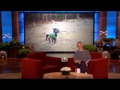 Ellen's mash-up of a sheep and a screaming lady. For some reason I couldn't stop laughing!