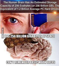 Dammit, brain!