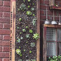 DIY Vertical Succulent Planter#/172547/diy-vertical-succulent-planter?&_suid=136573081220709325218909079511