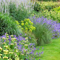Border in geel en violet Porch Garden, Garden Plants, Garden Landscaping, Back Gardens, Outdoor Gardens, Stipa, Back Garden Design, Strawberry Garden, Garden Images