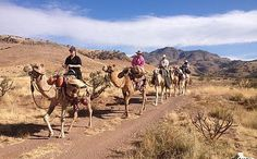 You don't have to travel to Egypt to ride camels! You can do it in Texas! Click here to find out where
