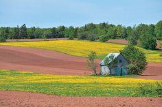 カナダの東、『赤毛のアン』の島は ゆったりスローライフで快適度満点!|カナダ、感嘆の旅|CREA WEB(クレア ウェブ)