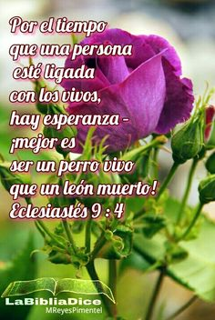 Jesus Saves, Amazing Grace, Bible Quotes, Spanish, God, Mariana, Quotes From The Bible, Prayers, True Words