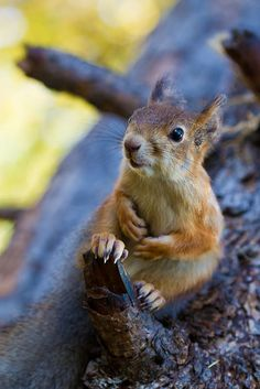 Animals are Better than Humans <3 Squirrel