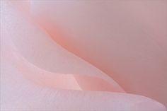 Pink Rose Macro - IMG_0685 by Bahman Farzad, via Flickr