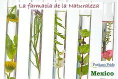 ¿Sabías que México tiene una riquísima variedad de plantas medicinales y muchas de ellas se usan tradicionalmente como remedios caseros? Tal es la cantidad de especies de plantas medicinales de México que solamente en el estado de Veracruz se recopilaron cerca de 500, el total de plantas medicinales en México asciende a casi 10,000 especies distintas.  http://www.puritanspride.com.mx/?scid=30314