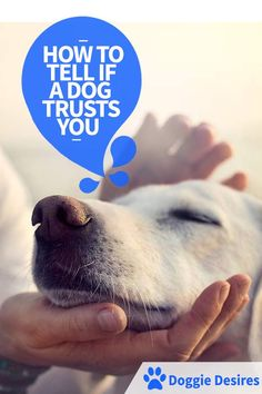 How To Tell If A Dog Trusts You >> http://doggiedesires.com/how-to-tell-if-a-dog-trusts-you/