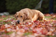 Does your pet love the fall leaves? #fallfrenzy