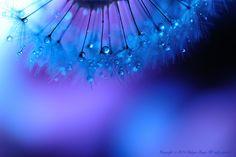 Photo Blue syndrome~Mystical- style par Lafugue Logos   on 500px