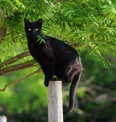 A very attentive cat. m