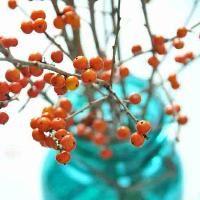 winter #winter #berries