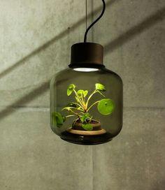 Serre\ lampe