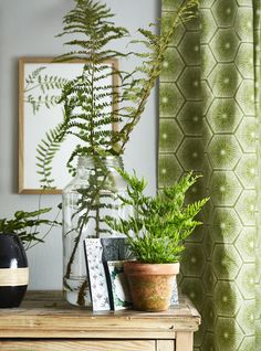 How to stylishly bring Pantone Colour of the Year 'Greenery' into your living room