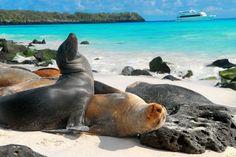 http://imagineafricatravel.files.wordpress.com/2012/07/islas-galapagos-ecuador-galapagos-islands-ecuador1152_12972078733-tpfil02aw-12879.jpg için Google Görsel Sonuçları