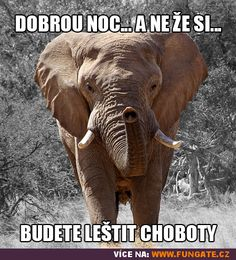 Dobrou noc… a ne že si… Elephant, Jokes, Fantasy, Funny, Animals, Art, Art Background, Animales, Husky Jokes