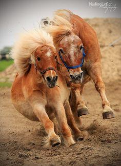 Mikhail Kondrashov horse - Поиск в Google