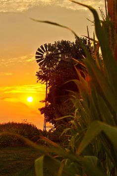 countryparadise: September Morn on The Corn (by jackalope22)