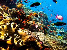 Beautiful underwater scene in Bunaken...