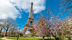 Paris, Eiffel Tower, spring, cherry blossoms, France
