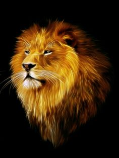 Majestic lion idea for tattoo.