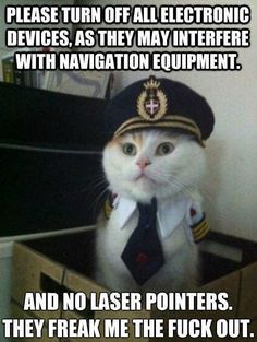 Who the eff has a pilot costume for their cat... I think that's the most important issue here...