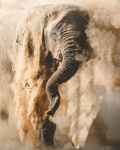 Ele Dusting by Sean Braine on A lonely bull Desert adapted elephant dusts himself in a coating of powder in the Aba Huab Valley. All About Elephants, Save The Elephants, Wildlife Photography, Animal Photography, Beautiful Creatures, Animals Beautiful, Animal Original, Animals And Pets, Cute Animals