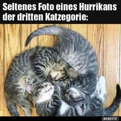 Rare photo of a hurricane of the third cat's gospel . Funny Sports Pictures, Funny Animal Pictures, Animals And Pets, Funny Animals, Cute Animals, I Love Cats, Cool Cats, Photos Rares, Grumpy Cat