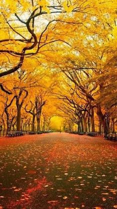 Yellow Tree Canopy, Orange Lemon ‿⭐️⁀Couture Central Park, New York City Beautiful World, Beautiful Places, Beautiful Live, Ville New York, Fall Pictures, Autumn Photos, Mellow Yellow, Stunning View, Central Park