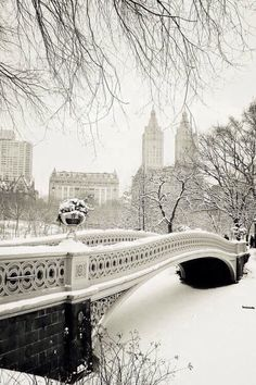 Snow in central park.