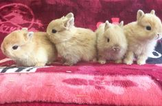 "975 Likes, 9 Comments - ラビットインパクト🇯🇵 (@rabbitimpact_) on Instagram: ""もう一枚!  #bunny #rabbit  #animal  #pets #bunnystagram #instapets #rabbitstagram #instarabbit  #動物…"""
