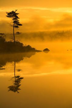 ~~Lone Pine And Misty Lake At Dawn ~ Rocky Lake, Lakeview, Nova Scotia, Canada by Irwin Barrett~~