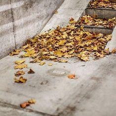 En ting som er utrolig fascinerende er hvordan trær og planter kan ta over hele byer. Så fort menneskene forsvinner tar de vel en kollektiv avgjørelse. Endelig. La oss få vekk faenskapen. Gjøre som sjefen sier. Alt tilbake til det naturlige. Hver gang jeg ser blader legge seg betong fantaserer jeg. De er små spioner som undersøker byggmassen. Hvor ofte er de rare Sapiens her. Kan vi ta tilbake det som er vårt? Tilkalle forsterkninger? Mye av det vi mennesker har skapt er kopier av naturen… Instagram, Nature