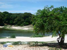 Google Image Result for http://upload.wikimedia.org/wikipedia/commons/e/ee/25-02-2009_lagoas_da_cidade_de_salvador_bahia_013.JPG