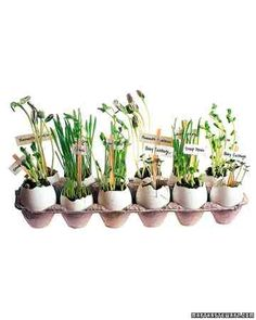 Young gardeners can use eggshells as pots to start seeds and coffee-stirrer tags to foretell what will pop up where this spring. Plant seeds according to package instructions, and nestle planters in an egg carton on a sunny windowsill, where they can be watered easily.