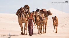 PLOT: The true story of Australian adventurer Robyn Davidson (Mia Wasikowska) who, in set off on a nine-month journey across the Outback with n Robyn Davidson, Mia Wasikowska, Christopher Mccandless, Vince Vaughn, Adam Driver, Movies To Watch, Good Movies, Movies 2014, Tracks Movie