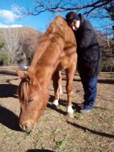 Aprender a unirte con nuestros caballos te aportará una paz interior increíble.