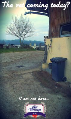 Dressage Hafl: Your horse being afraid of the vet? Hafl is definitely not ;)