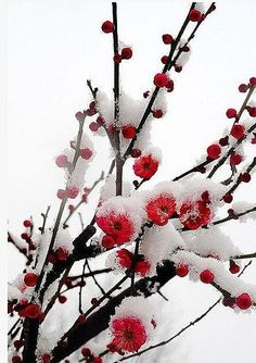 Beginning Mandarin class. Winter Garden, Botany, Altered Art, Beautiful Images, Spring Time, Garden Plants, Mother Nature, Frost, Snow
