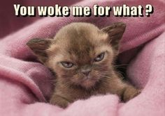 My face when somebody or something wakes me up...