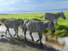 Kenya - Lake Nakuru National Park...saw white rhinos and pink flamingoes here too