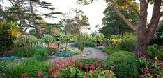 Garden Ideas - Succulent Gardens   The Diggers Club
