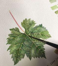 #WorldWatercolorGroup - Watercolour Painting Grape Leaf - Saswati Chakraborty - Doodlewash