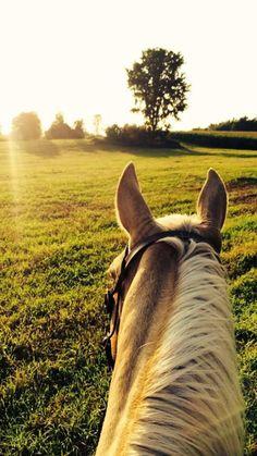 Uzun bi yol bekler bizi belki de k? Cute Horses, Pretty Horses, Horse Love, Beautiful Horses, Animals Beautiful, Horse Photos, Horse Pictures, Cavalo Wallpaper, Animals And Pets