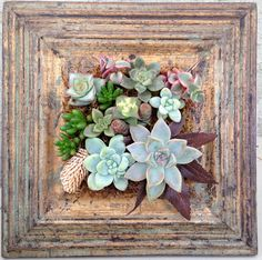 Vertical Living Succulent Wall with Rustic Wood frame via Etsy. Succulent Frame, Vertical Succulent Gardens, Succulent Gardening, Succulent Arrangements, Succulent Terrarium, Organic Gardening, Succulents In Containers, Cacti And Succulents, Planting Succulents