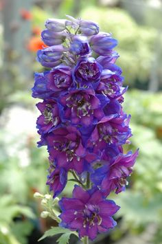 Pin Larkspur Tattoo Pictures To Pin On Pinterest on Pinterest