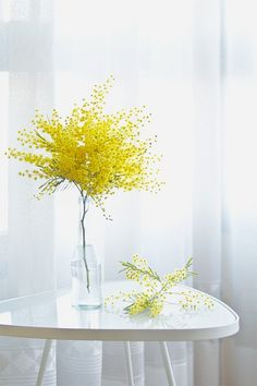 Simple Mimosa Flowers Arrangement in Tall Glass Vase/Bottle. My Flower, Fresh Flowers, Yellow Flowers, Beautiful Flowers, Cactus Flower, Exotic Flowers, Draw Flowers, Colorful Roses, Glass Flowers